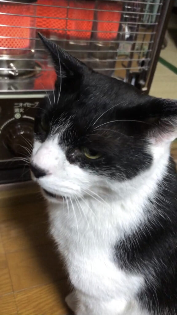 ゆのブログ 猫様🐱 – 新橋 セクキャバ おっパブ いちゃキャバ Burst バースト
