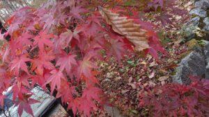 さおりブログ 食欲の秋